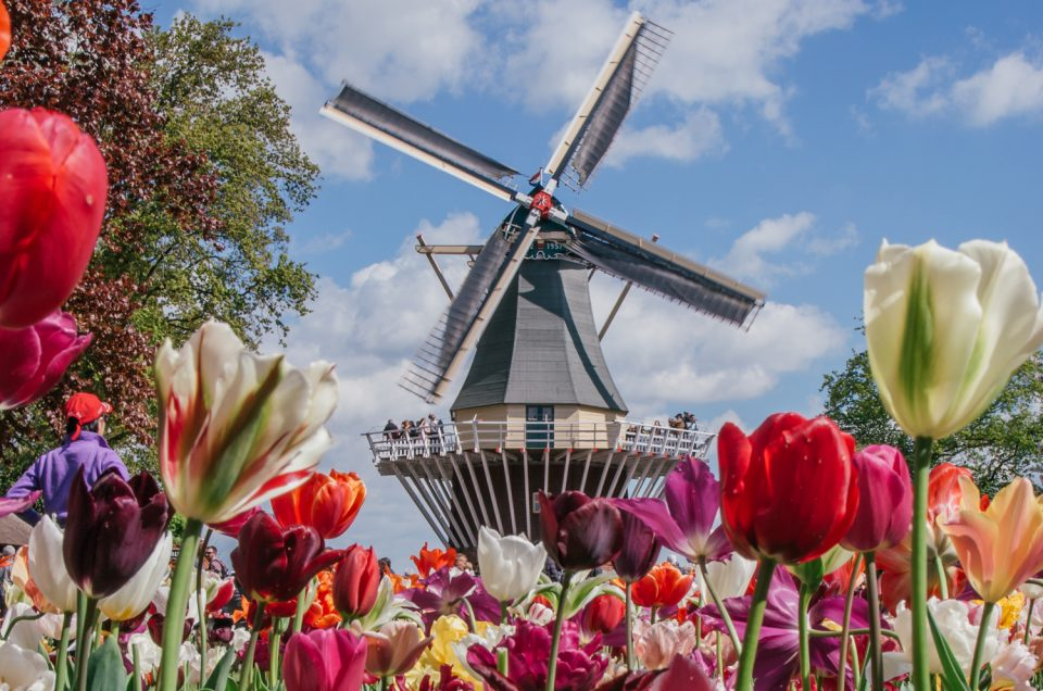 Why Everyone Should Visit Keukenhof, Holland's Tulip Paradise